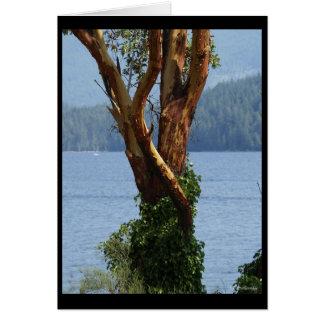 """Cartão Do """"cartão da árvore Arbutus"""""""