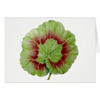 """Cartão Do """"cartão da folha gerânio"""" do Pelargonium"""