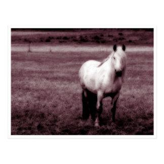Cartão do cavalo