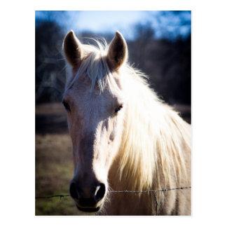 Cartão do cavalo branco