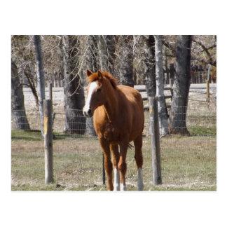 Cartão do cavalo da castanha