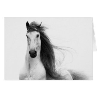 Cartão do cavalo da glória do garanhão