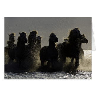 Cartão do cavalo das surpresas III