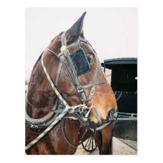 Cartão do cavalo de Amish