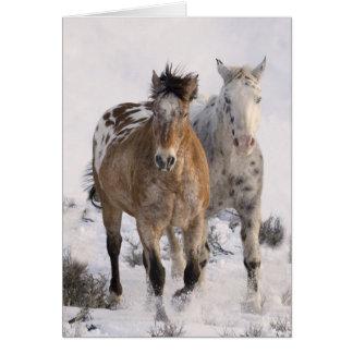 Cartão do cavalo de dois Appaloosas