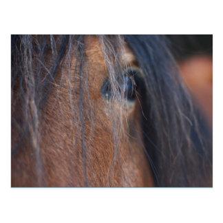 Cartão do cavalo de esboço