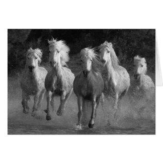 Cartão do cavalo do funcionamento da água