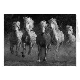 Cartão do cavalo do funcionamento dos cavalos
