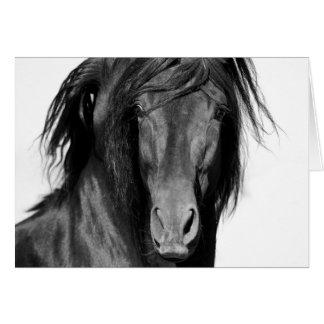 Cartão do cavalo do negro do EL Caballo