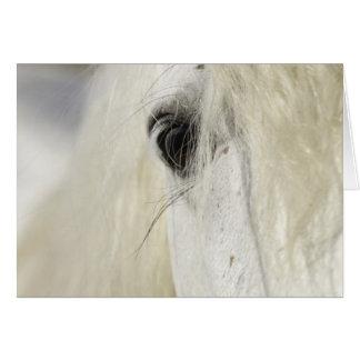Cartão do cavalo do olho do garanhão de Camargue