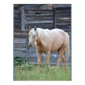 Cartão do cavalo do Palomino