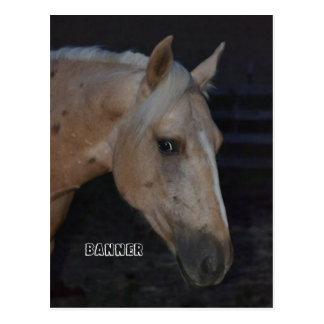 Cartão do cavalo do Palomino de Bandeira nomeada