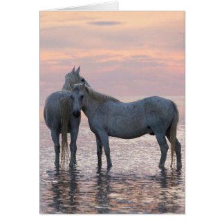 Cartão do cavalo - dois amigos dos cavalos brancos