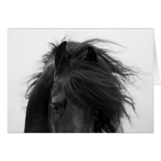 Cartão do cavalo dos olhos do frisão
