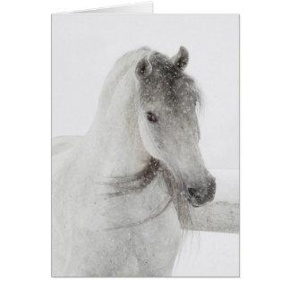 Cartão do cavalo - égua nevado perniciosa