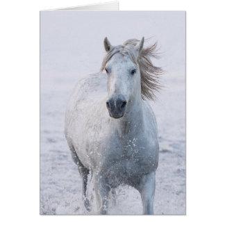 Cartão do cavalo - funcionamentos do cavalo branco