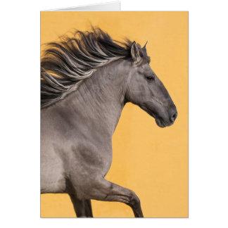 Cartão do cavalo - funcionamentos do garanhão de