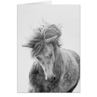 Cartão do cavalo - funcionamentos novos do