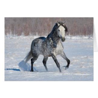 Cartão do cavalo - garanhão cinzento Dappled da