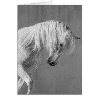Cartão do cavalo - o garanhão de TheWhite olha