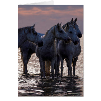 Cartão do cavalo - quatro cavalos no por do sol