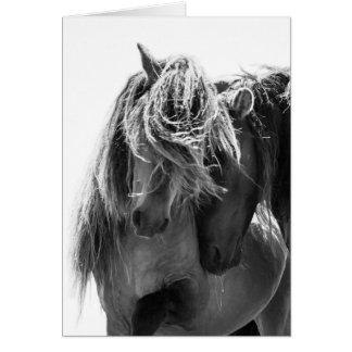 Cartão do cavalo selvagem de 2 garanhões da ilha