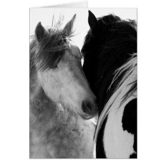 Cartão do cavalo selvagem de dois garanhões