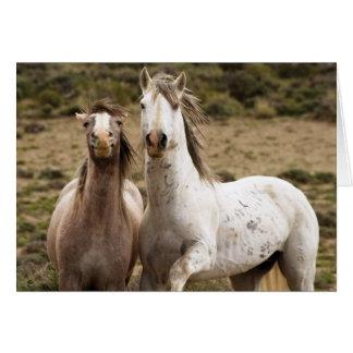 Cartão do cavalo selvagem de riso de cavalo