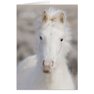 Cartão do cavalo selvagem do potro da neve