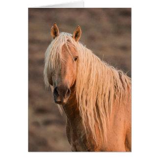 Cartão do cavalo selvagem do retrato do alvorecer
