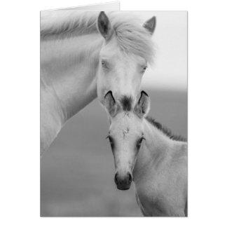 Cartão do cavalo selvagem dos irmãos
