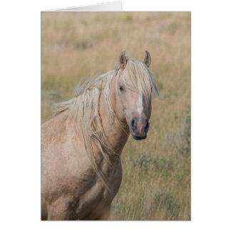 Cartão do cavalo selvagem - garanhão selvagem do