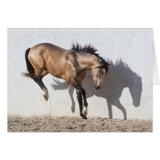 Cartão do cavalo - tocando para baixo
