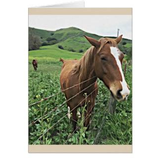 Cartão do cavalo, vazio
