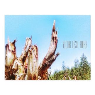 Cartão do céu azul de coto de árvore do eucalipto