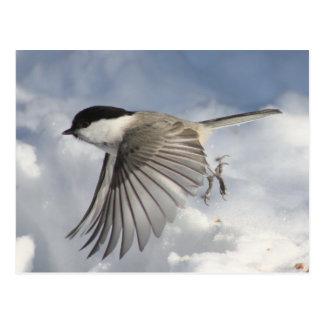 Cartão do Chickadee em vôo
