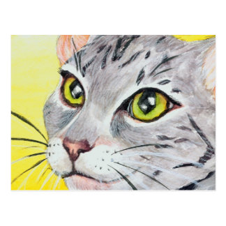 Cartão do close up do gatinho