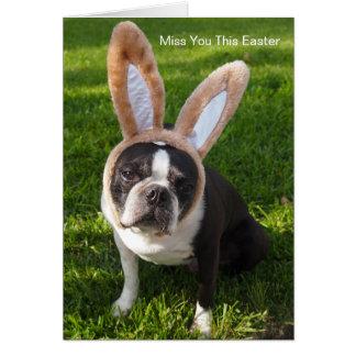 Cartão do coelho de Boston Terrier