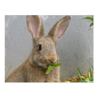 Cartão do coelho de coelho