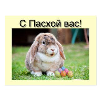Cartão do coelho do felz pascoa cartão postal