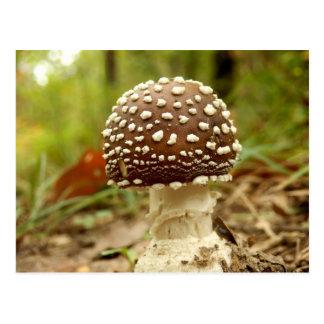 Cartão do cogumelo do boné da pantera
