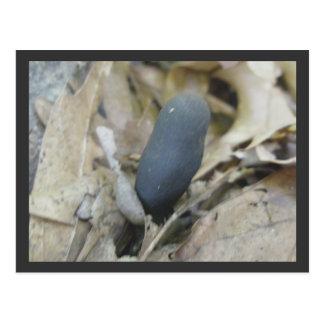 Cartão do cogumelo do dedo do homem inoperante