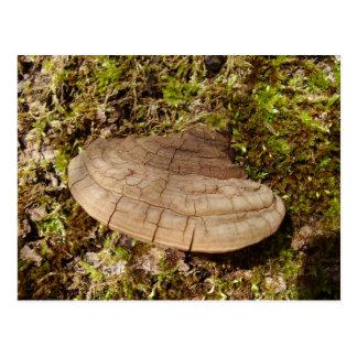 Cartão do cogumelo do igniarius de Phellinus