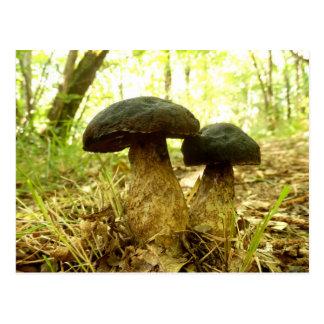 Cartão do cogumelo do pruinatus de Xerocomus