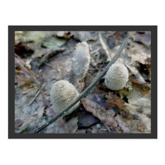 Cartão do cogumelo do salgueiro de bichano