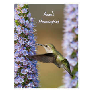 Cartão do costume da flor do colibri