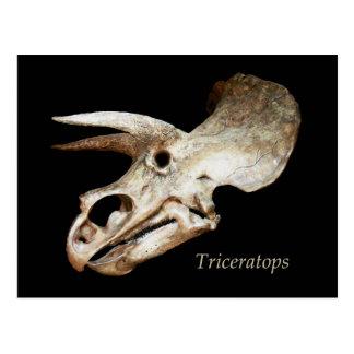 Cartão do crânio do Triceratops
