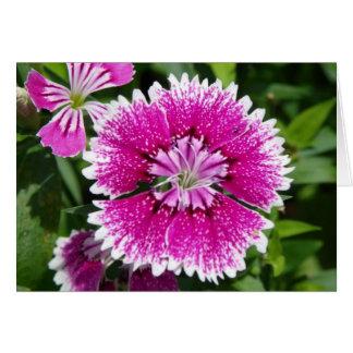 Cartão Do cravo-da-índia do cravo fim cor-de-rosa/roxo