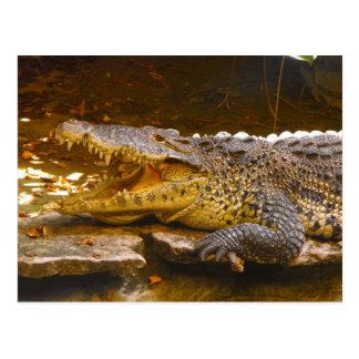 Cartão do crocodilo