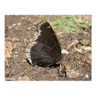 Cartão do ~ da borboleta de casaco de lamentação